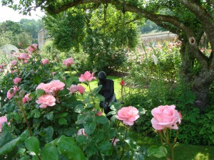 Carefree in the rose gardens!